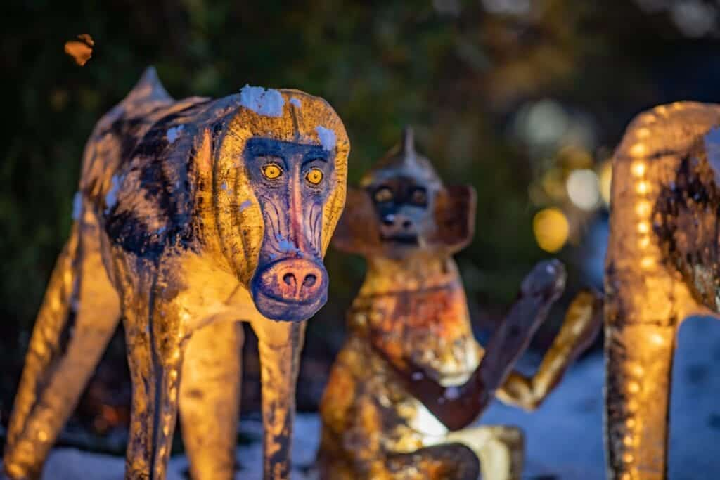 The Lanterns At Chester Zoo 2020 Baboons Scaled.jpg