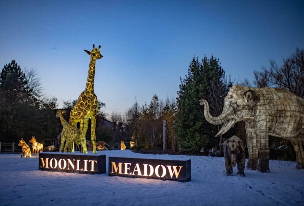 The Lanterns At Chester Zoo 2020 Moonlit Meadow Scaled.jpg
