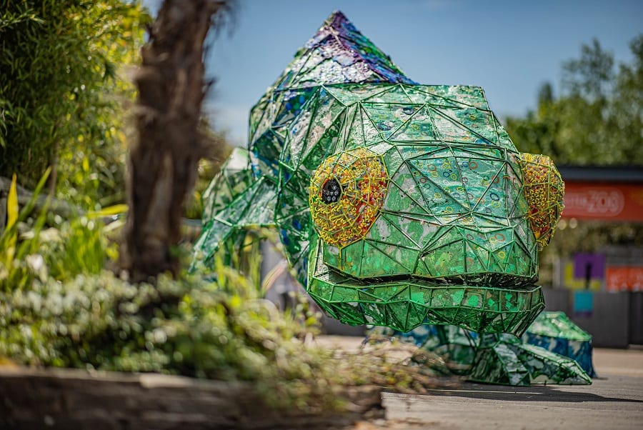 Animals and nature at Chester zoo with the love it for longer chameleon