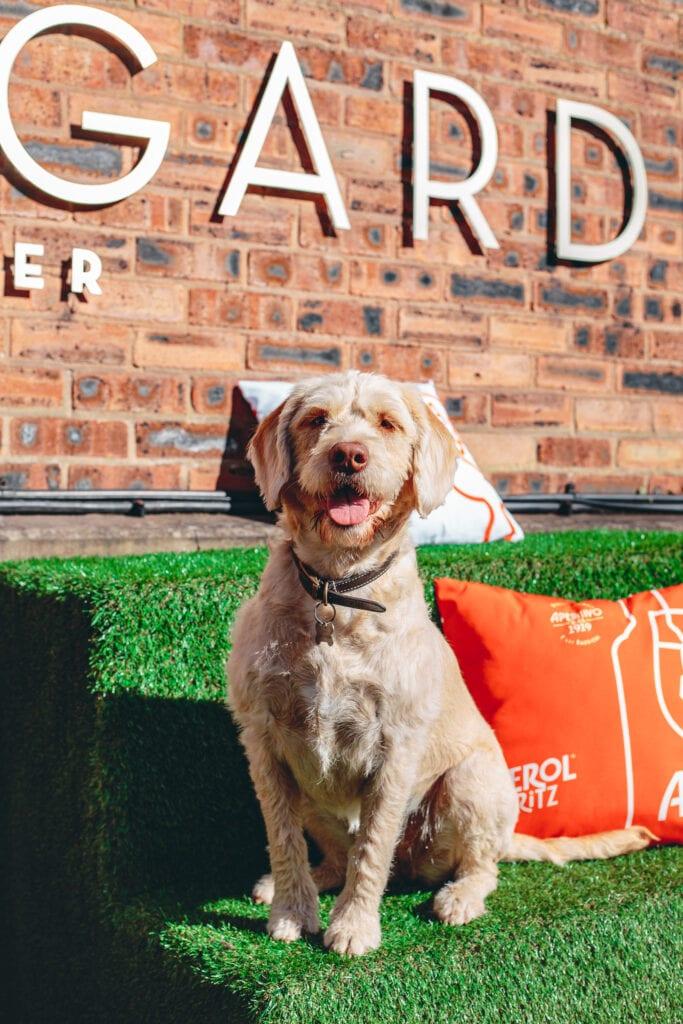 the townhouse secret garden dog friendly